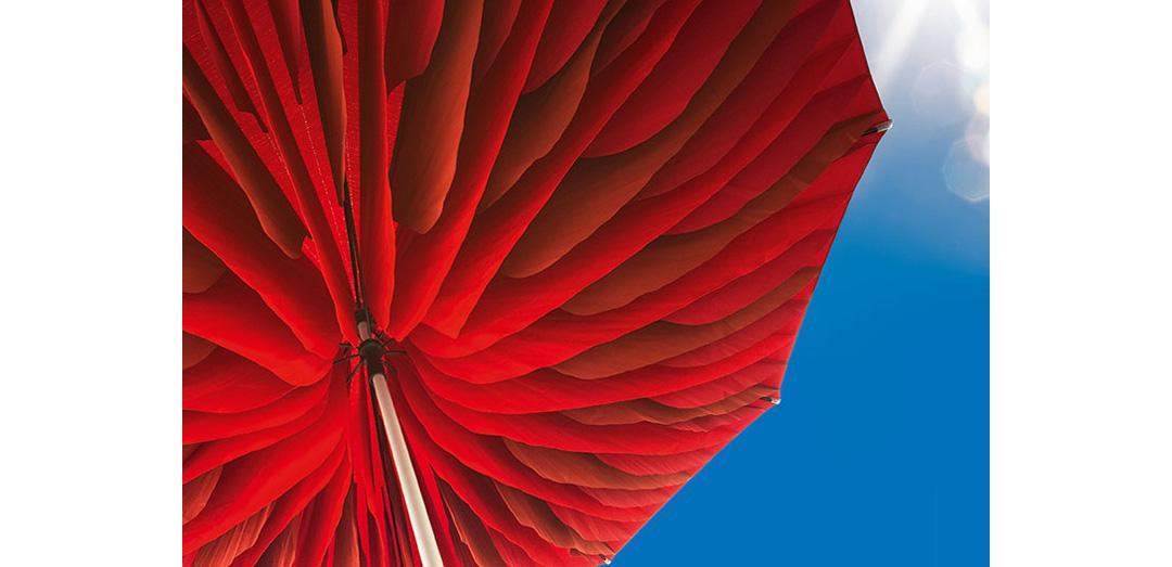 Paddo Şemsiyesi